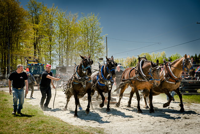 images/programmation-tire-chevaux.jpg